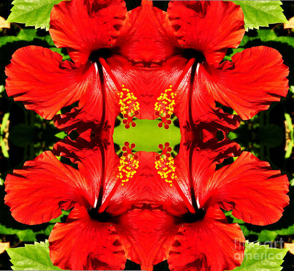 Photograph - Symmetry by Clayton Bruster