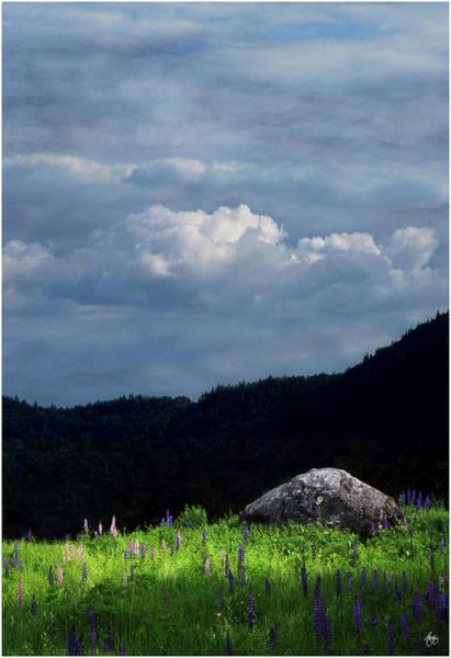 Photograph - Symphony Of Lupine by Wayne King