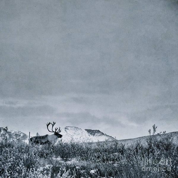 Kanada Wall Art - Photograph - Land Shapes 38 by Priska Wettstein