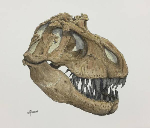 Painting - T. Rex Skull 2 by Rick Adleman