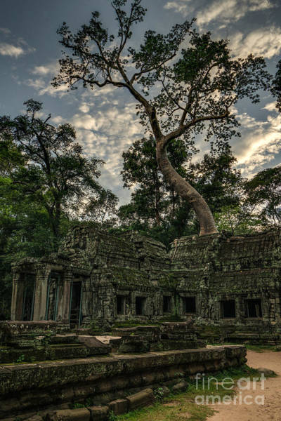 Angkor Wall Art - Photograph - Ta Phrom Massive Tree by Mike Reid