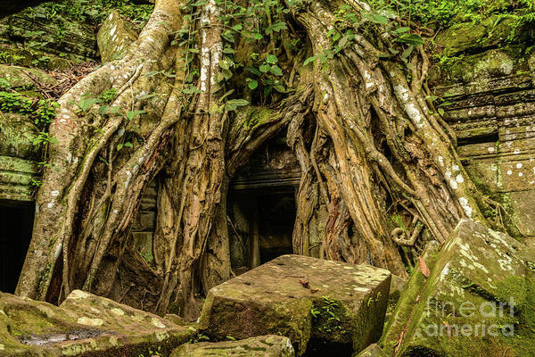 Photograph - Ta Prohm 2 by Werner Padarin