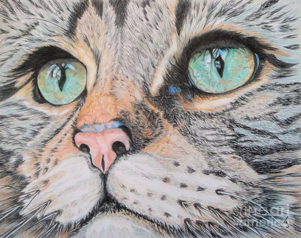 Tabby Drawing - Tabby Cat by Yvonne Johnstone