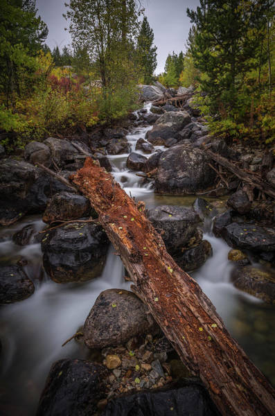 Wall Art - Photograph - Taggert Creek Waterfall Log by Scott McGuire