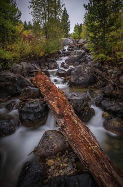 Photograph - Taggert Creek Waterfall Log by Scott McGuire