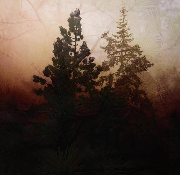 Digital Art - Tahoe Pines by Richard Ricci