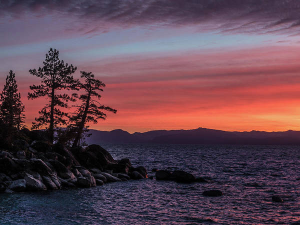 Photograph - Tahoe Sunset Trees by Martin Gollery