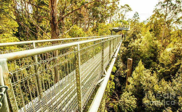 Forestry Photograph - Tahune Airwalk Tasmania by Jorgo Photography - Wall Art Gallery