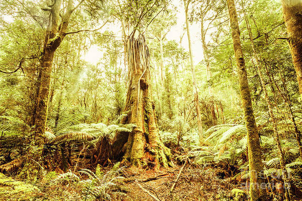 Rain Forest Photograph - Tahune Forest Reserve by Jorgo Photography - Wall Art Gallery