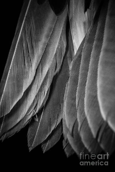 Black Tail Photograph - Tail Feathers Abstract by Edward Fielding