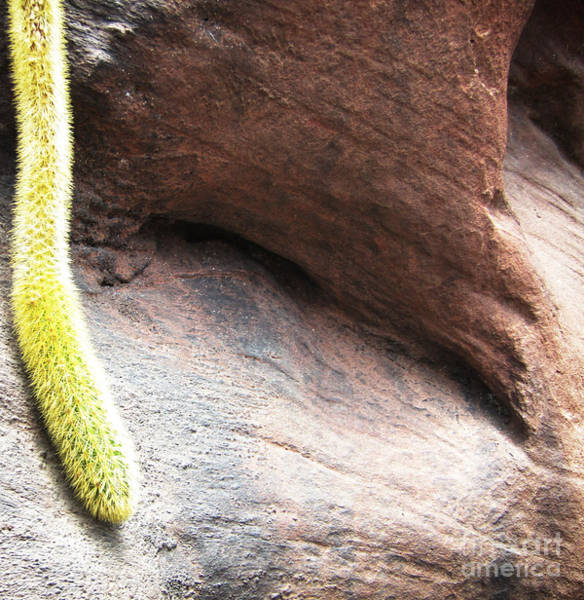 Photograph - Tail Of The Cactus by Robert Knight