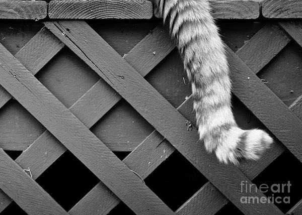 Photograph - Tail by Patrick M Lynch