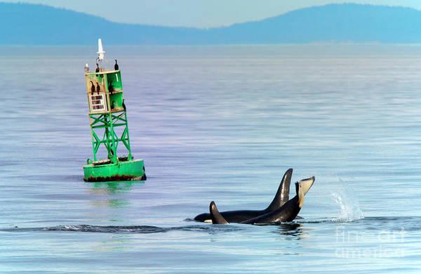 Killer Whales Wall Art - Photograph - Tail Slap by Mike Dawson