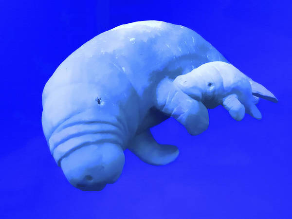 West Indian Manatee Photograph - Taino With Baby by Robert OP Parrish