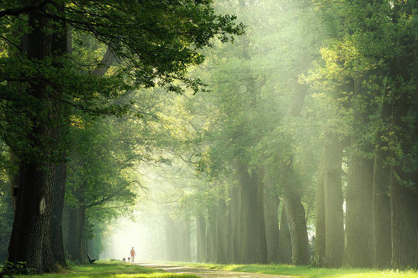 Wall Art - Photograph - Take A Walk by Martin Podt