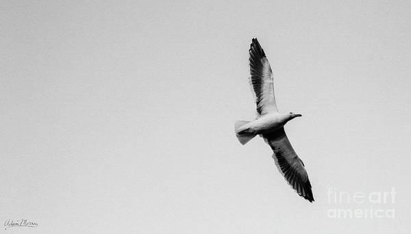 Take Flight, Black And White Art Print