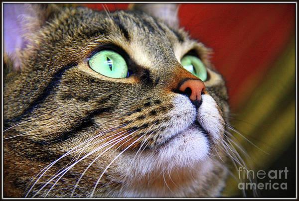 Photograph - Take It From Cats by Jolanta Anna Karolska