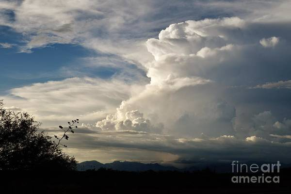 Coronado National Forest Photograph - Take The World By Storm by Janet Marie