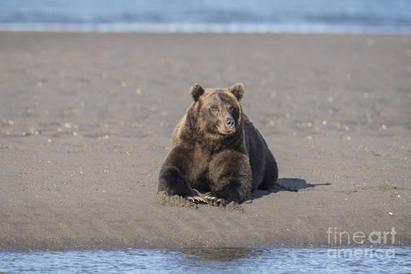 Laying Out Photograph - Taking A Break by Sandra Bronstein