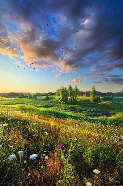 Photograph - Taking A Time Out by Phil Koch