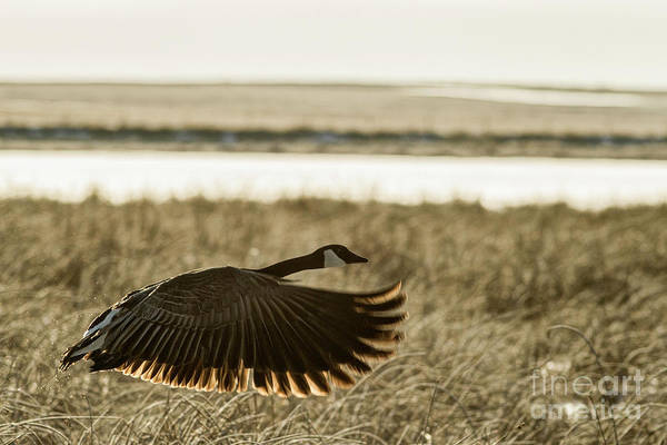 Photograph - Taking Flight by Brad Allen Fine Art