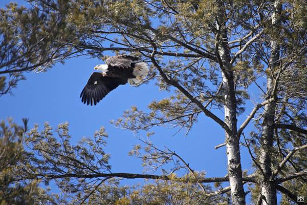 Photograph - Taking Flight by John Meader