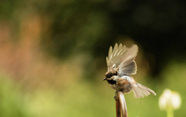Photograph - Ready To Fly by Marilyn Wilson