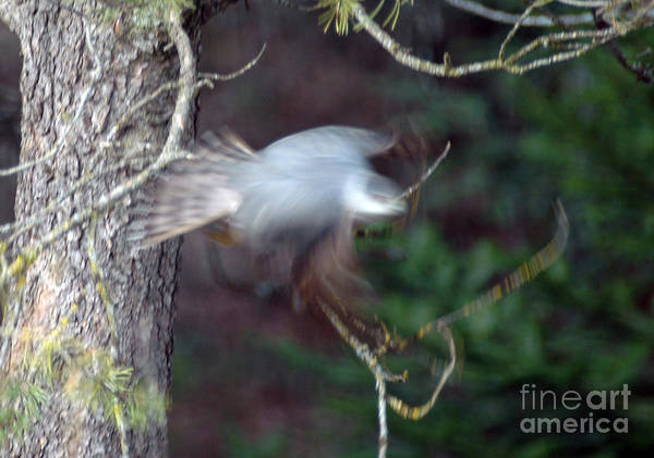 Photograph - Taking Off by Cindy Murphy - NightVisions