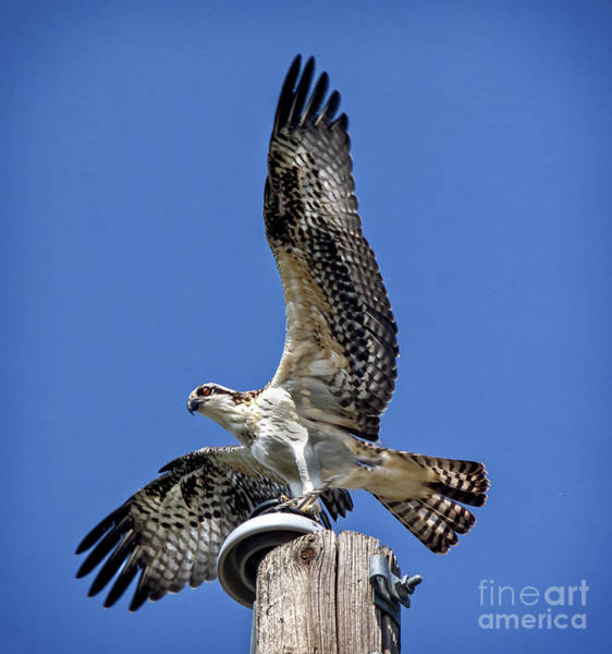 Wall Art - Photograph - Taking Off by Robert Bales