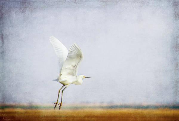 Egret Digital Art - Taking Off by Terry Davis