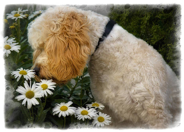 Photograph - Taking Time To Smell The Flowers by Susan Candelario