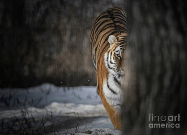 Photograph - Taking Up The Chase by Brad Allen Fine Art