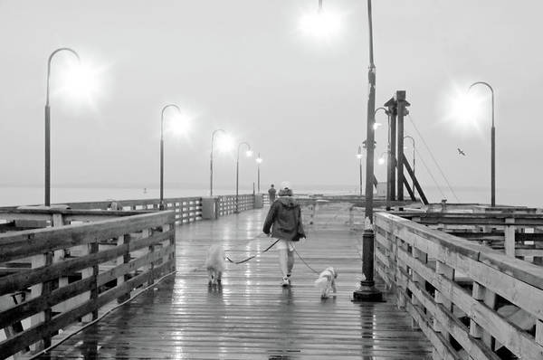 Walking In The Rain Wall Art - Photograph - The Dog Walker by Diana Angstadt