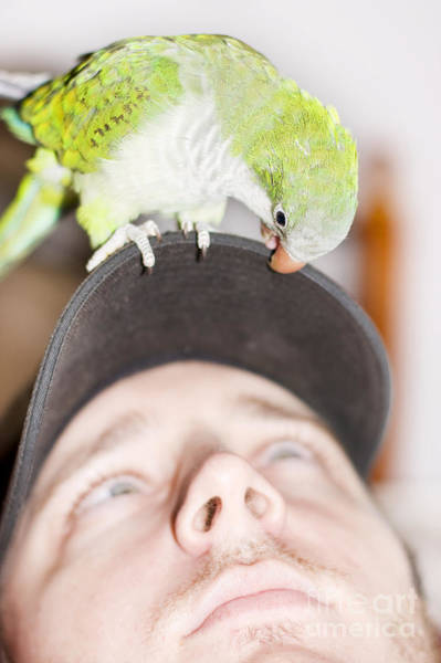 Parakeets Photograph - Talking To The Animals by Jorgo Photography - Wall Art Gallery
