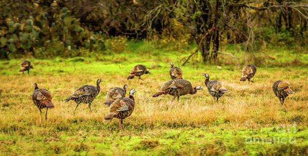 Photograph - Talking Turkey by Jon Burch Photography