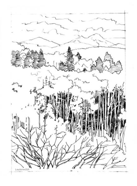 Wall Art - Drawing - Tall Aspens Rocky Mountains by John Lautermilch