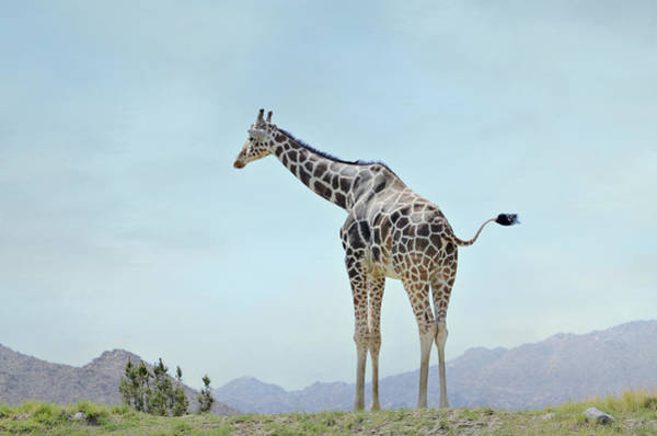 Photograph - Tall Blonde 3 by Fraida Gutovich