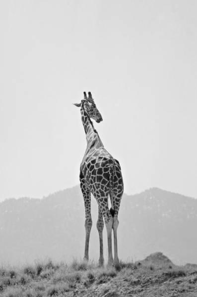 Photograph - Tall Blonde by Fraida Gutovich