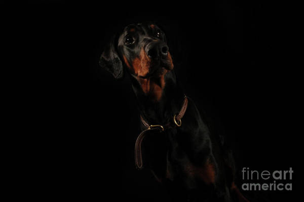 Service Dog Photograph - Tall, Dark And Handsome by Randi Grace Nilsberg