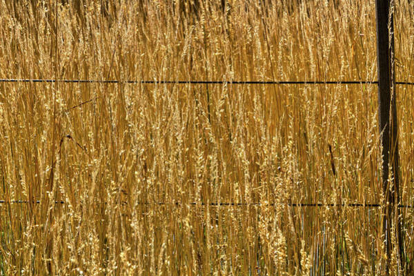 Photograph - Tall Grass By A Wire Fence by Stuart Litoff