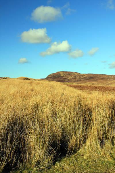 Photograph - Tall Grass by Jennifer Robin