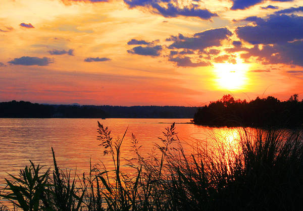 Photograph - Tall Grass Sunset Smith Mountain Lake by The American Shutterbug Society