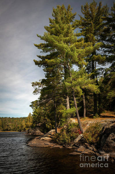 Wall Art - Photograph - Tall Pines On Lake Shore by Elena Elisseeva