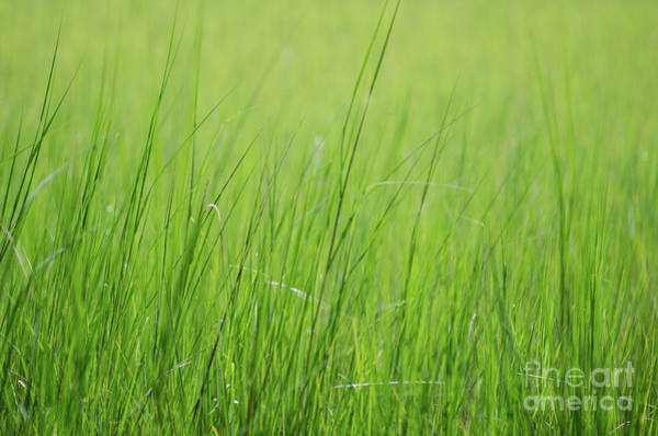 Photograph - Tall Summer Grass Memories by Dale Powell