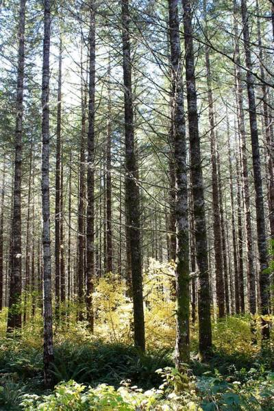 Photograph - Tall Trees by Brian Eberly