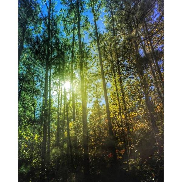 Wall Art - Photograph - Tall Trees On A Country Road by Joan McCool