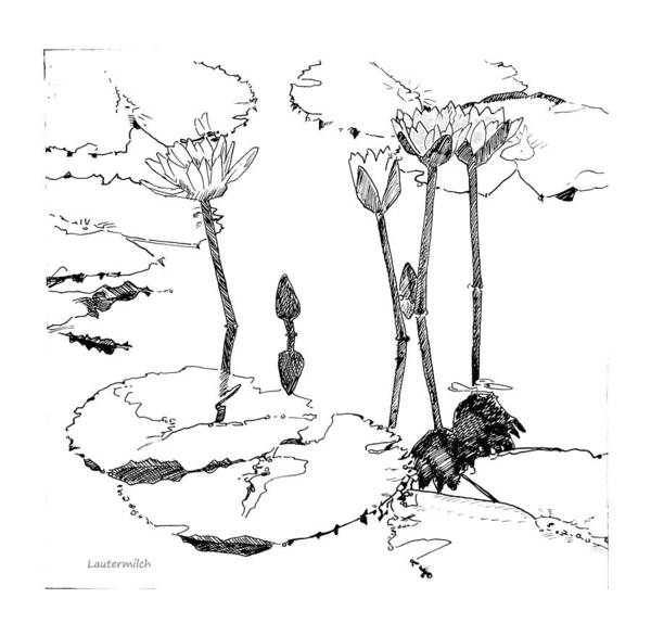 Wall Art - Drawing - Tall Water Lilies by John Lautermilch