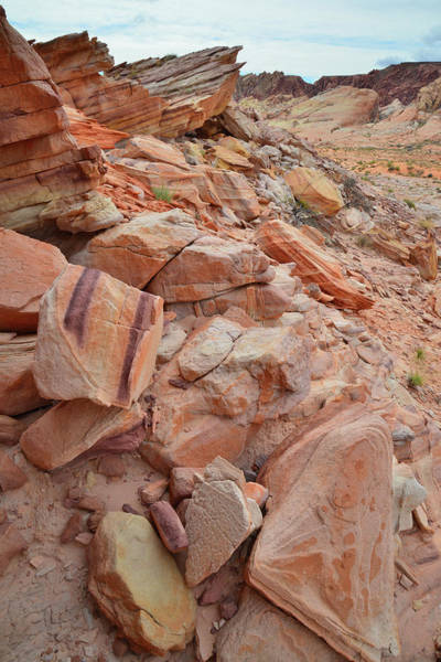 Photograph - Talus Slope Color In Valley Of Fire by Ray Mathis