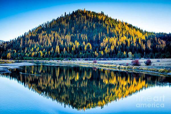 Photograph - Tamarack Glow Idaho Landscapes By Kaylyn Franks by Omaste Witkowski