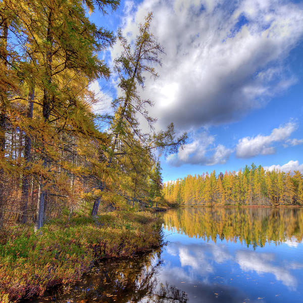 Photograph - Tamaracks At Woodcraft by David Patterson